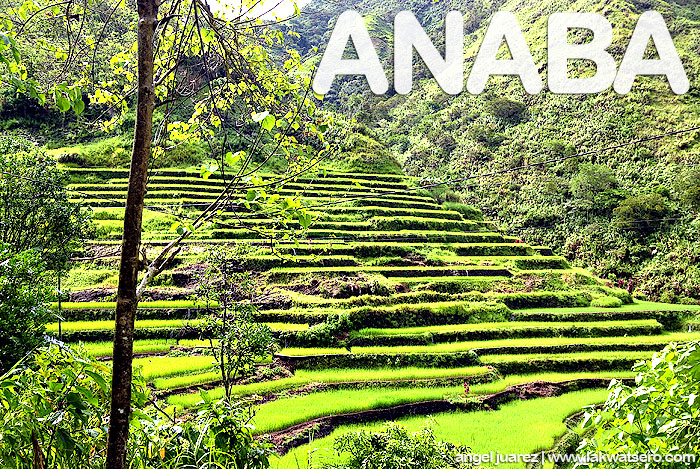 Rice Terraces in Anaba Village