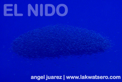 Diving in El Nido: Abdeen's Reef, Paglugaban Island and ...