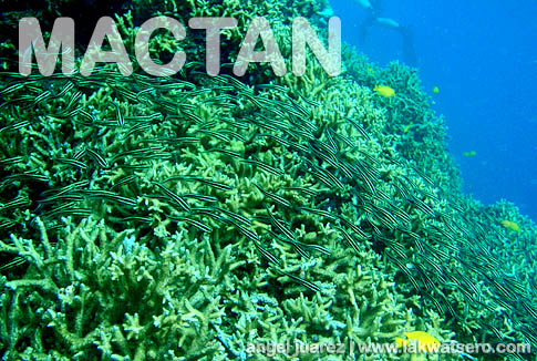 Diving in Mactan