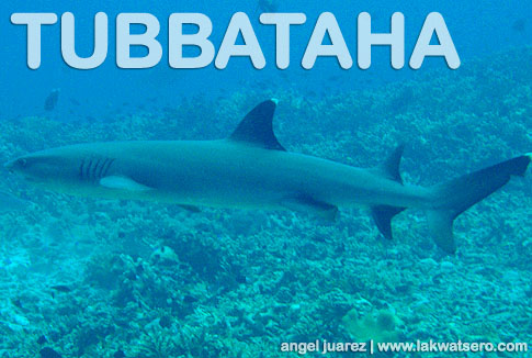 Tubbataha Logs Day 2