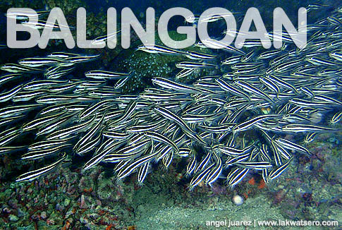 Diving in Balingoan
