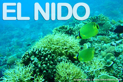 Diving in El Nido